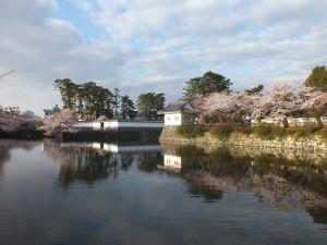 小田原城の桜その2