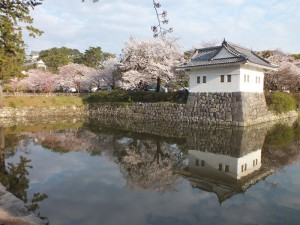 小田原城の桜その5