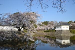 二の丸堀周辺の桜2