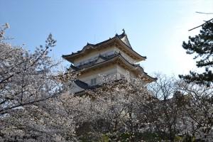 屏風岩の桜1