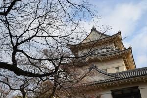 小田原城の桜(様子見編)2