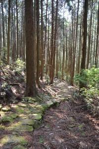 熊野古道・通り峠ルート その1