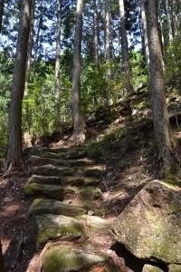 熊野古道・通り峠ルート その2