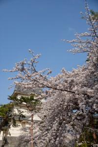 天守と桜 その一