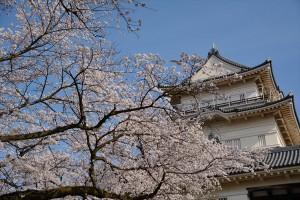 天守と桜 そのニ