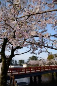 お堀端通りの桜その二