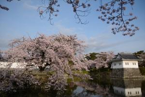 隅櫓と桜その一