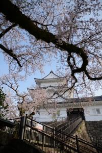 天守と桜その四