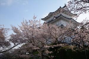 天守と桜その六