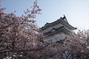 天守と桜その七