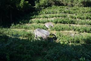 段々畑の中の石垣用石材
